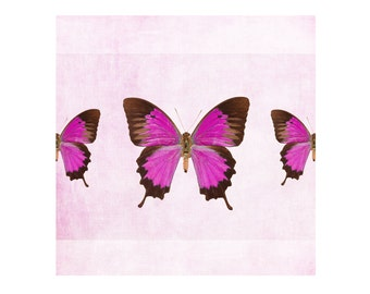 Pink Butterfly art print, butterfly photography, butterflies artwork, wall art, kids decor nursery decor, bathroom decor fine art print