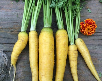 Organic Heirloom Yellowstone Carrots Sweet Seeds Rare