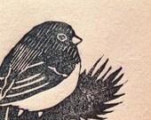 Gray-headed junco