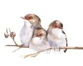 Wren print of watercolour painting A3 largest size - wren painting W040 - watercolour painting of wrens - australian bird art