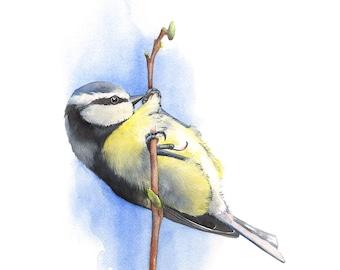 Blue Tit Original watercolour painting, Blue Tit watercolor painting original, Original bird painting, Original watercolor painting bird