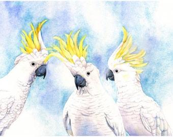 Cockatoo print of watercolour painting C3615 print size A4- bird art, wall art, home decor, australian bird art