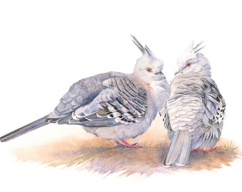 Crested Pigeon print of watercolour painting CP3015 - A3 print wall art print - bird art - art print - wildlife print