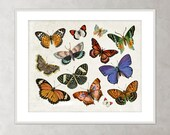 Butterfly Print Scientific Natural History Butterfly Illustration Monarch Blue Butterflies