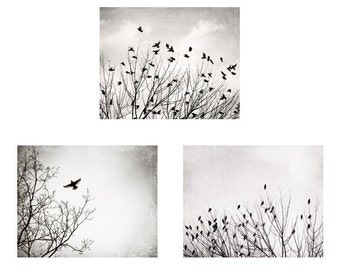 Black and White Bird Photography Set, birds in tree photos three grey nature pictures light gray decor bird wall art pale nursery artwork