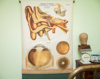 Rare Early 20th Century Vintage American Frohse Classroom Eye Ear Anatomical Chart Pulldown