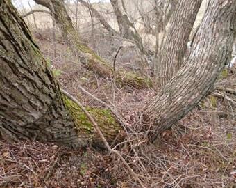 North side of Tree