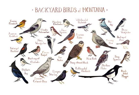 Montana Backyard Birds Field Guide Art Print / Watercolor