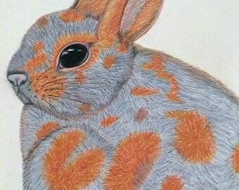 Bunny Rabbit Pencil Portrait