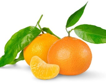 10ml Tangerine Cosmetic Fragrance Oil for Soaps, Candles, Wax Tarts Bath and Body Products