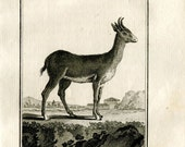 1811 Antique Print Le Nagor  Redbuck Antelope African Animal Engraving from Buffon Natural History