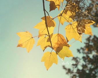 Golden Maple Leaves Photo, Nature Photography, Fall Color Print, Yellow Gold Blue, Autumn Maple Tree Photo, Golden Foliage, Fall Wall Decor
