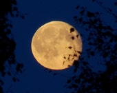 Golden Full Moon Photo, Dark blue and Gold Moon phase wall art, Night sky, moon behind birch tree, leaf silhouette photograph, Lunar image
