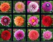 Elizabeth's Studio - Digital Screen Printed Fabric - Digital Garden - Squares Panel