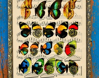 Vivid Butterfly Wing Diagram Original Vintage Print on an Unframed Upcycled Bookpage