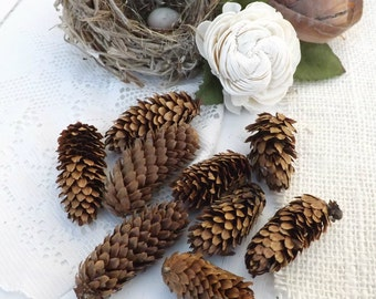 """50 Spruce Cones Organic Pine Cones All Natural Christmas Decor Woodland Wreath Supply Fall Decor Small 2""""-3"""""""
