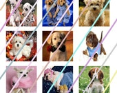 Cute Dogs 1 inch Square Tile Images 4x6 Digital Collage Sheet Instant Download