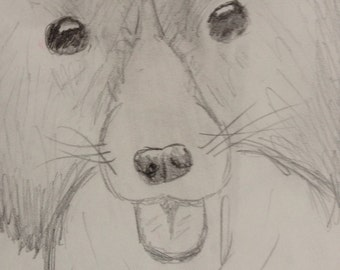 Border Collie drawing