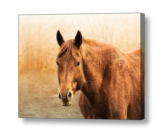 Chestnut Sorrel Horse Canvas Print, Rustic Western Southwestern Fine Art Photography on Giclee Gallery Wrap Canvas