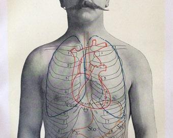 Antique Anatomy Bookplate Print 1900s Stomach Bowels Ribcage Moustache 1908 Vintage Medical Diagram