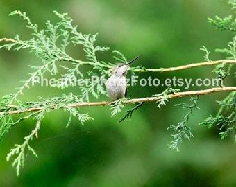 Hummingbird Wildlife Photography Fine Art Nature Print, Bird Photo, Hummingbird Home Decor, Children Nursery Wall Art