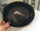 Bird Skull Painting- Framed and Matted Gicle Print