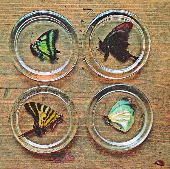 Set of 4 Entemology Butterfly Round Table Coasters, Preserved in Clear Casting Resin.