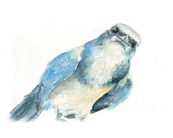 Watercolor Bluejay, Bluejay Print, Bird Print, Blue Bird Print