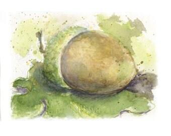 Watercolor Acorn, Acorn Print,