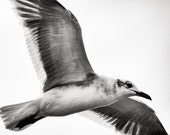 Gull Photo, Bird photography, Seagull, Nature Photo, Black and White - 8x8 fine art photograph