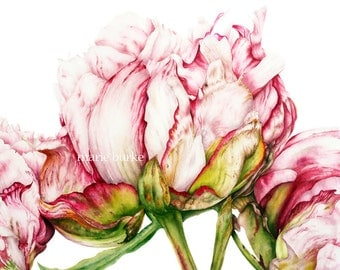Botanical Print, Peonies, Art Print, Watercolor Print, Botanical Art, Peony print, Flower Print