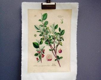Botanical floral print on canvas