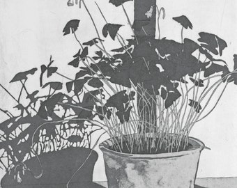 Oxalis Triangularis Etching - Original Hand Pulled Print by William White - Etching with Aquatint on Somerset Paper  - FREE SHIPPING