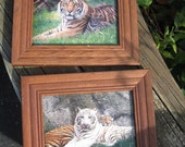 Tiger Pictures in wood frames, without glass, white tiger, 1990's era two pictures