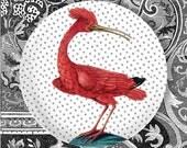Vintage pink bird melamine plate