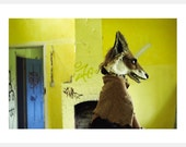 YELLOW FOX Fine art A3 photographic poster print