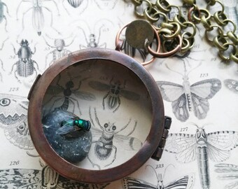 FOR DEIRDRE-preserved fly on river stone, antique insect diagram, relic necklace