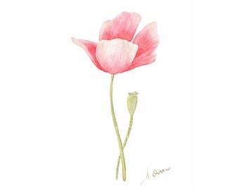 Pink Poppy, Original watercolor illustration, Romantic papaver flower painting, Farmhouse decor, Cottage wall art. 4x6 art ready to hang
