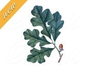OAK ACORN bookplate, green leaves, Instant Download Digital Image fruits clipart no.461