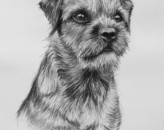 Border Terrier II dog art dog print fine art Limited Edition print from an original charcoal drawing by H Irvine