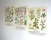 Set of 4. 1981 Vintage Educational Environmental Protection Floral Print Poster Flora DDR Germany, Flowers