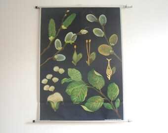 Vintage. Pull down chart. Botanical. School. Biology. Plant Science. Poster. Mid Century German DDR. Educational. Canvas. W