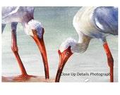 Wading Ibis, Original Watercolor Painting 11X14