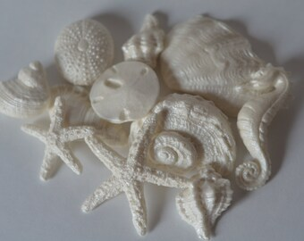 Set of 22 shell collection including seahorses