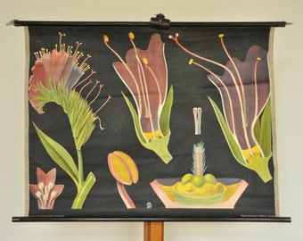 Rare Original Vintage Botanical Chart. Flower. Pink. Purple.  Pull Down School Chart. Jung Koch Quentell. Germany. 1121