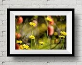 Delightful Florets, Fine Art Print, Nature Photography, Wall Art, Flower, Wall Deco, Home Deco, Floral, Outdoor, Wild Flower, Sunlight