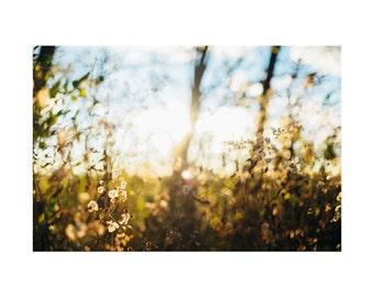 Light No. 1 Photography Print, Landscape Nature Photography, Golden Fine Art