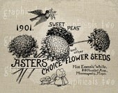 Asters antique seed packet image Instant graphic digital download image transfer for iron on fabric burlap decoupage pillow card  No gt249