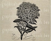 Bouvardia flower Calligraphy black white Instant digital download image for iron on fabric transfer burlap decoupage pillow card  No gt163