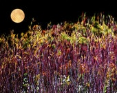 Full Moon Picture, Harvest Moon Photo, Moon Picture, Fall Foliage Print, Moon Print, Full Moon Photo, Fall Picture, Full Moon Print, Moon